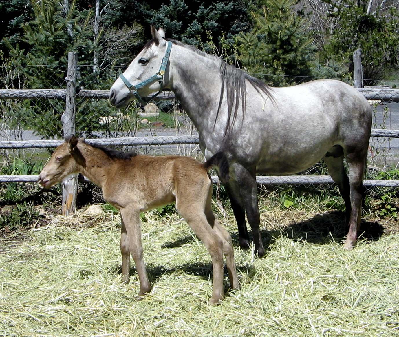 [Gandy+&+Hay+Baby+'06]