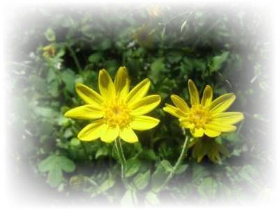 [yellow_flower.jpg]