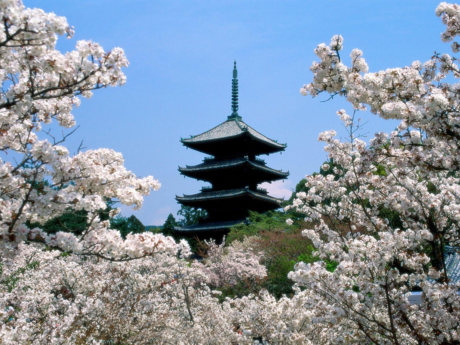 http://1.bp.blogspot.com/_708_wIdtSh0/S_5iOC60CKI/AAAAAAAABEQ/_M6DJCxmxzo/s1600/Cherry+Blossoms,+Ninna-Ji+Temple+Grounds,+Kyoto,+Japan.jpg