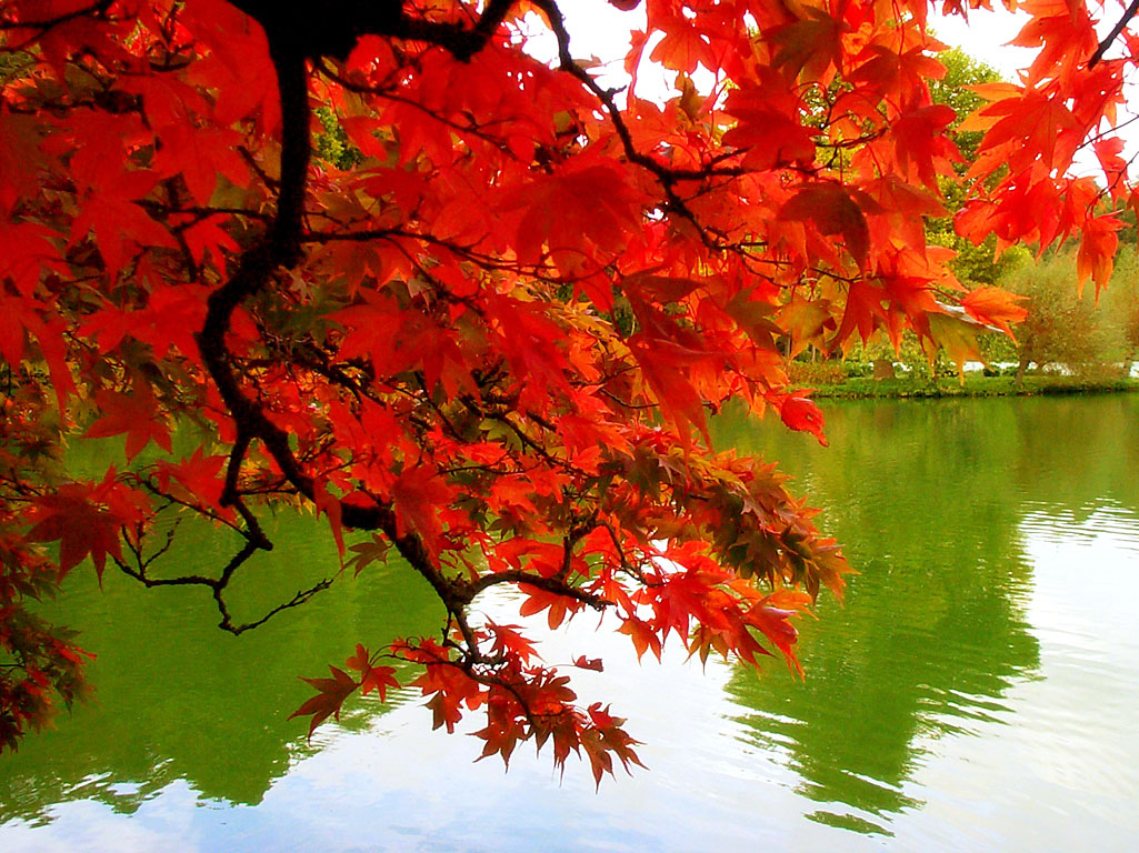 http://1.bp.blogspot.com/_70JElYVm91Q/TMhk2e6ukvI/AAAAAAAAJIM/HqGyDYt4Ja4/s1600/fall-autumn-colors-leaves-mexicanwave.jpg