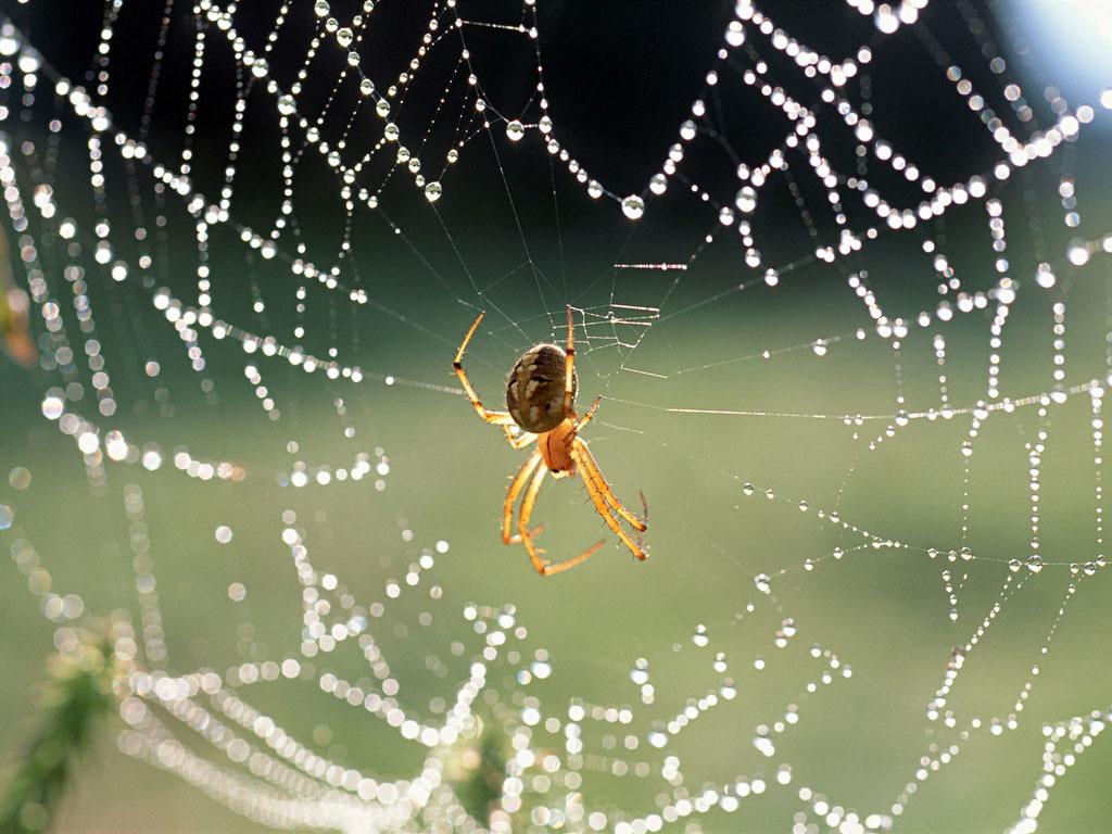 flores de jardim venenosas:própria idéia de aranhas no espaço traz à mente filmes de terror