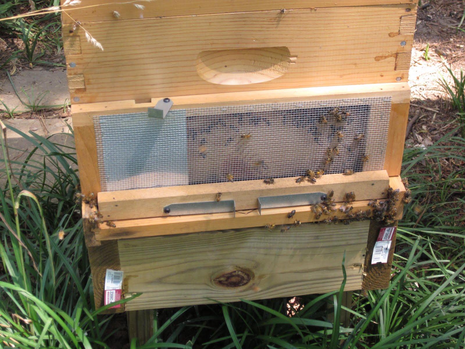 cassandra 39 s bees robber screen. Black Bedroom Furniture Sets. Home Design Ideas