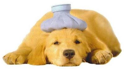 Dog Parvo Symptoms | Symptoms Of Dog Parvo