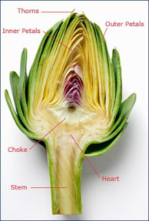 Green Fork Utah: Plant Anatomy 101: Artichokes!