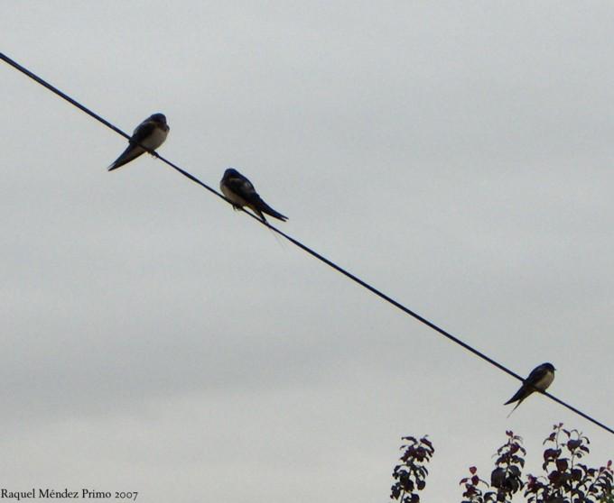 [Pájaros+en+la+niebla.jpg]