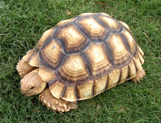 Geography of tortoises: Different Types of Tortoises