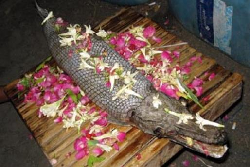 http://1.bp.blogspot.com/_74kkb7pbmeg/TCiM5X21NCI/AAAAAAAAAH4/lYn44uI1lWs/s1600/ikan-buaya.jpg