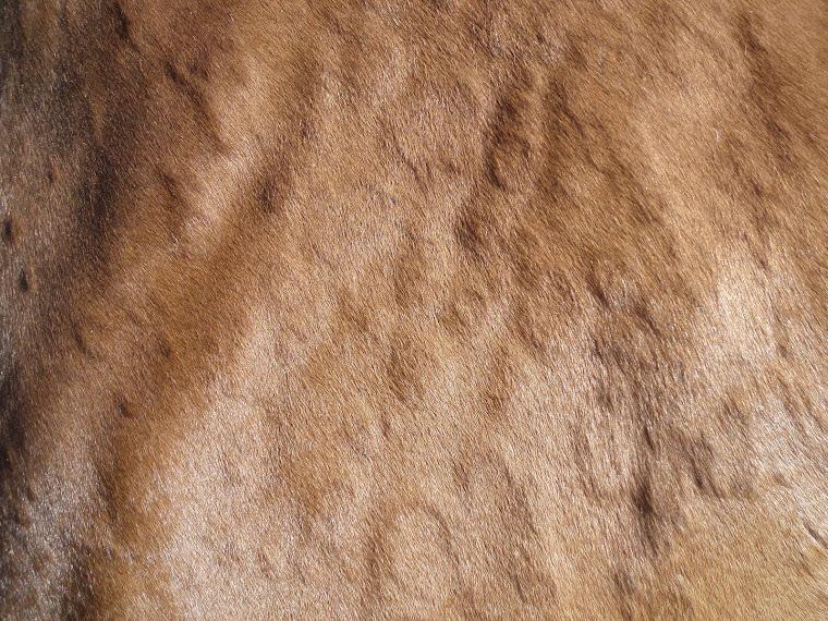 Paard met bulten op de huid