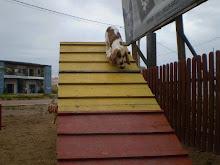 seu cão também pode fazer agility no hotel