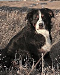 Maggie, RN AgNS AgIJS MADC SSGDC MSDC  Feb.14 2005 - Nov.12 2012