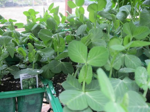 Greener Designs How to Grow a Winter Vegetable Garden in