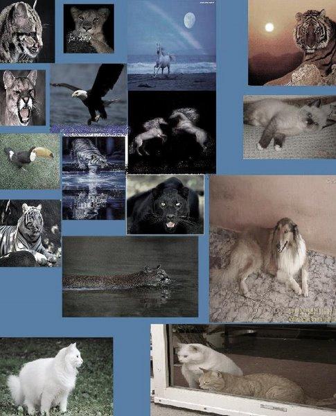 Defender os animais é o nosso dever...