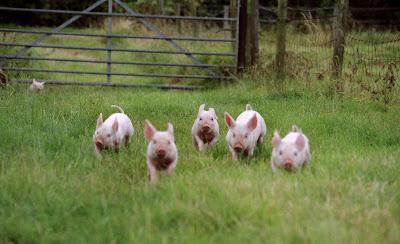 Running Piglets, by Liz Andreozzi