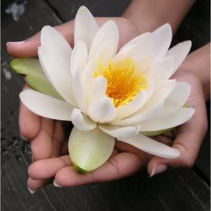 http://1.bp.blogspot.com/_7AMFCtD_QHI/S-UuRzpmOvI/AAAAAAAAAiw/91KlqvgAH4I/s1600/lotus-flower.jpg