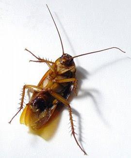 http://1.bp.blogspot.com/_7AwGsgB2Mew/SXi0j59LXoI/AAAAAAAAAdA/3cdjNSgrf4Y/s400/cucaracha.jpg