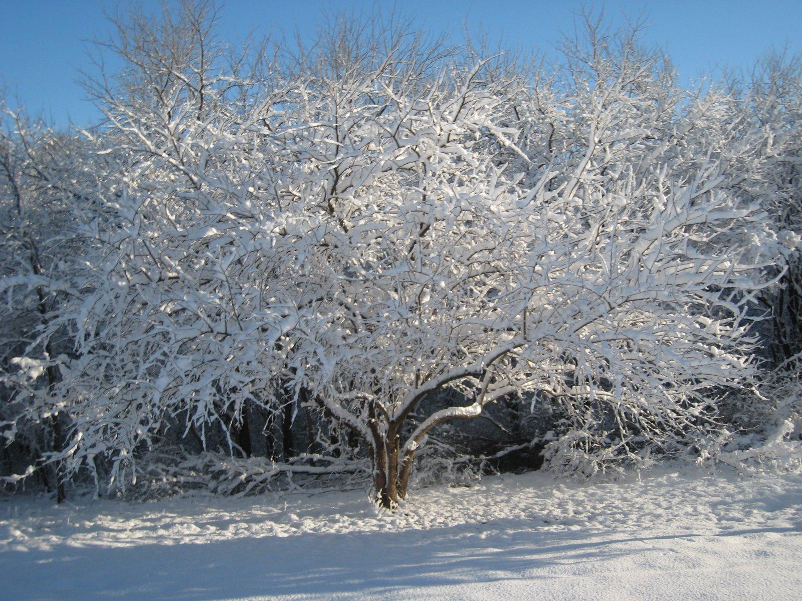 [snowing+025.jpg]