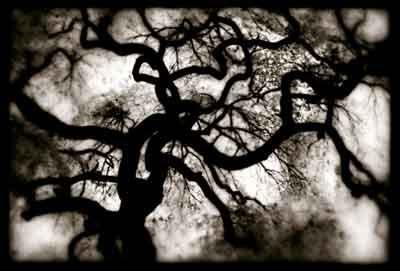 Tree - Scott Irvine [clique para ampliar]