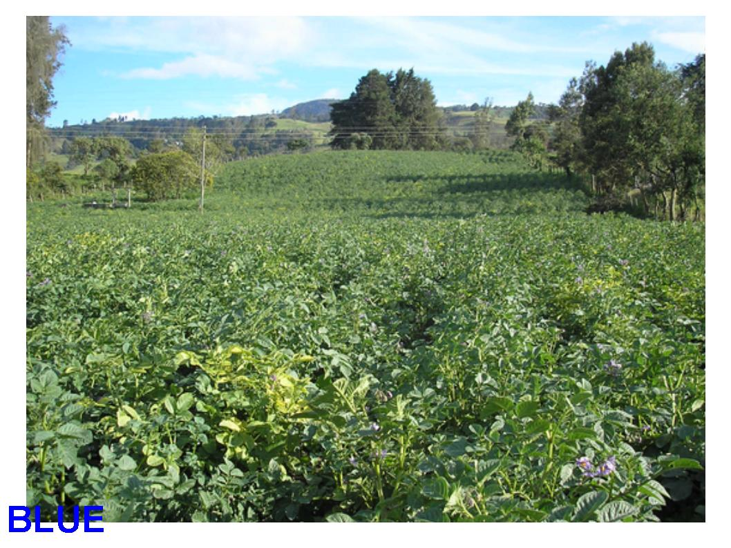 C mo cultivar papas en un huerto peque o - Como cultivar un huerto ...