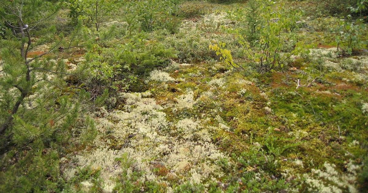 Northern exposure gardening northern wild berries and for Soil zones saskatchewan
