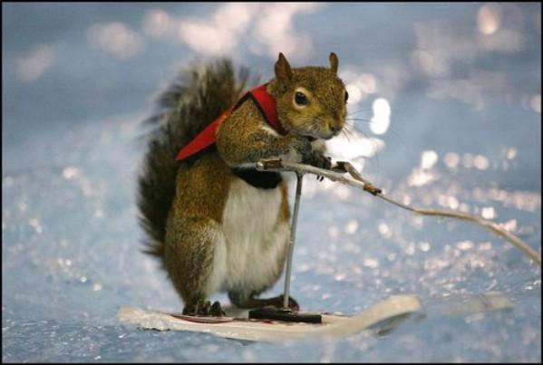 funny squirrels. Cute amp; Funny Squirrels