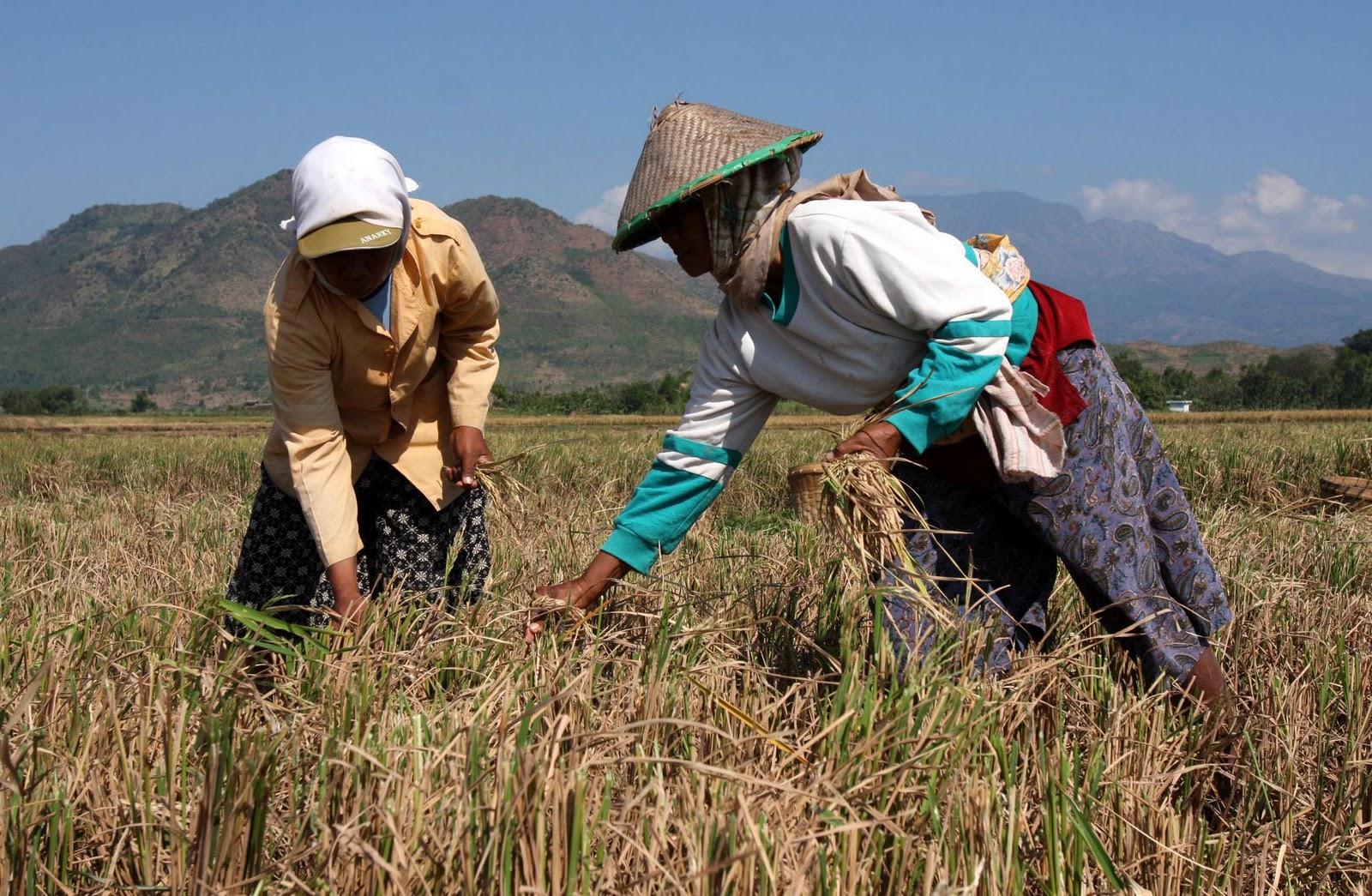 Melepas Lelah Petani Indonesia Miskin Siapa Peduli Bag 2 Selesai