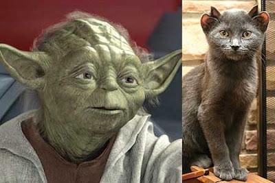 yoda gato cat
