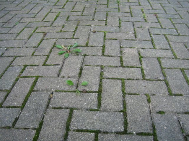 Attractive Brick Paver Sealing