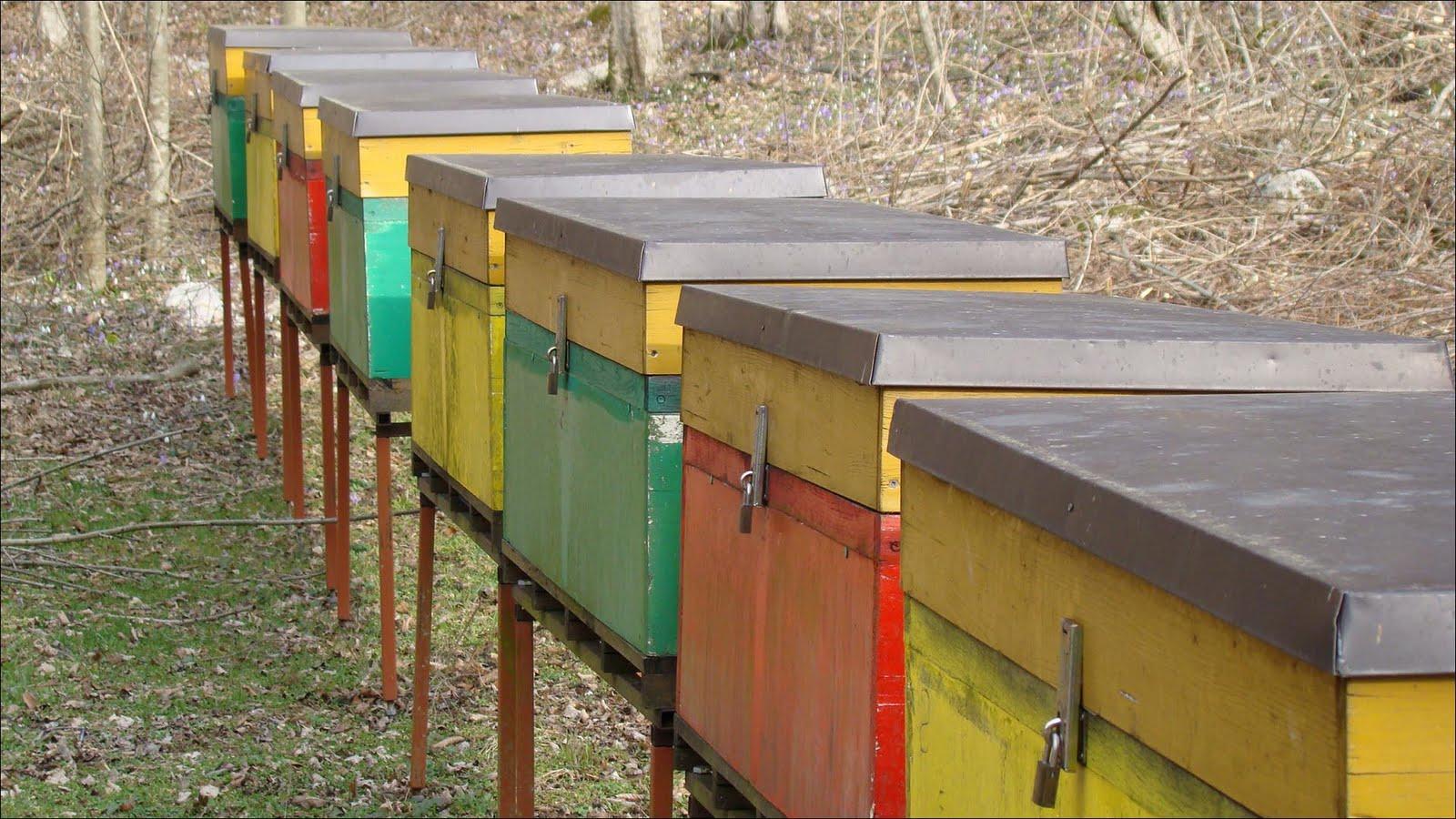 [Mehiläisboksit]