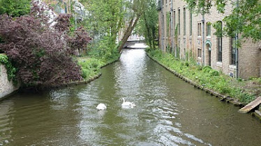 Swans in the canal