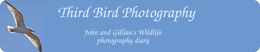 Third Bird Photography