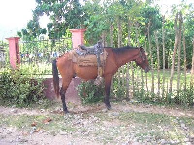 Horse, Yaruca, Honduras