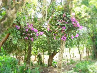 Orchids, Yaruca, Honduras