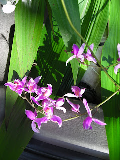 Wild orchids, Honduras