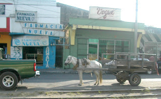 Horse and cart, La Ceiba, Honduras