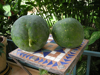 Moon and stars watermelon, La Ceiba, Honduras