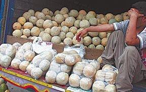 Honduran melons