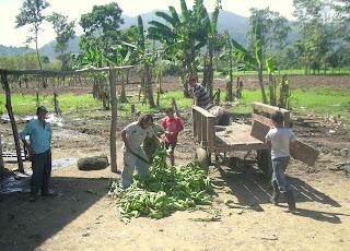 plantains, La Bomba, Jutiapa, Honduras