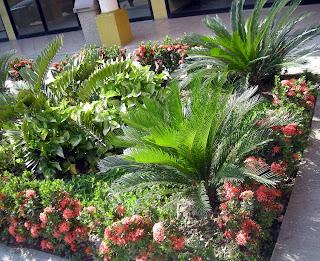 store landscaping, El Progreso, Honduras