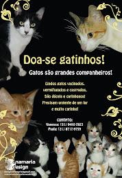 Doa-se Gatinhos Lindos!!!!