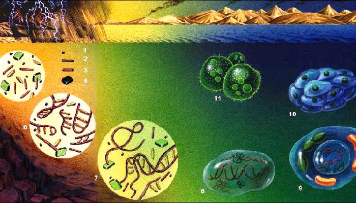 Resultado de imagen de Ubicando el comienzo de la Vida en la Tierra