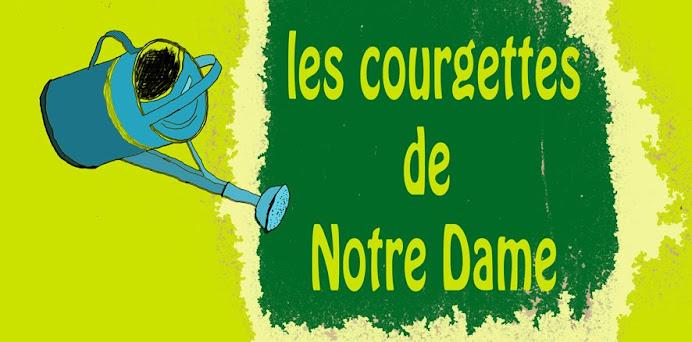 Les courgettes de Notre Dame
