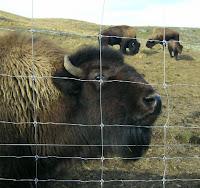 My New Zealand Vacation, Queenstown, Deer Park, Photo20720