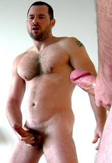 Gay bear, ursos