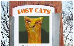 The Lost Cats Project