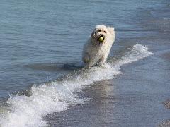 Barkley, the Camp Dog
