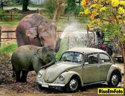Dois elefantes lavam um Fusca