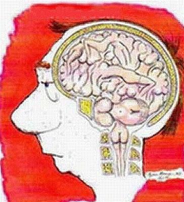 Desenho esquemático bem humorado do cérebro dos homens, que só pensam em sexo