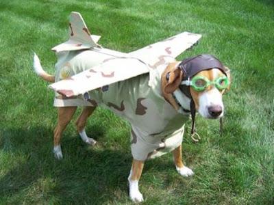 Foto de cachorro fantasiado de aviador