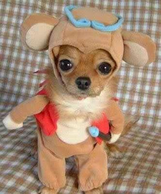 Cachorro fantasiado de ursinho Pooh