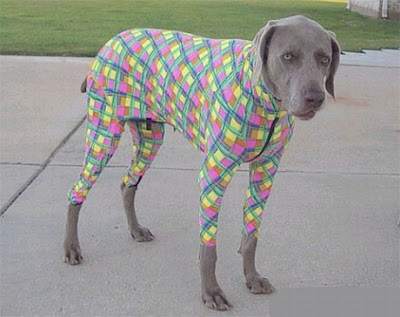 Cahorro ultra-fashion - disfarçado de toalha de mesa de boteco